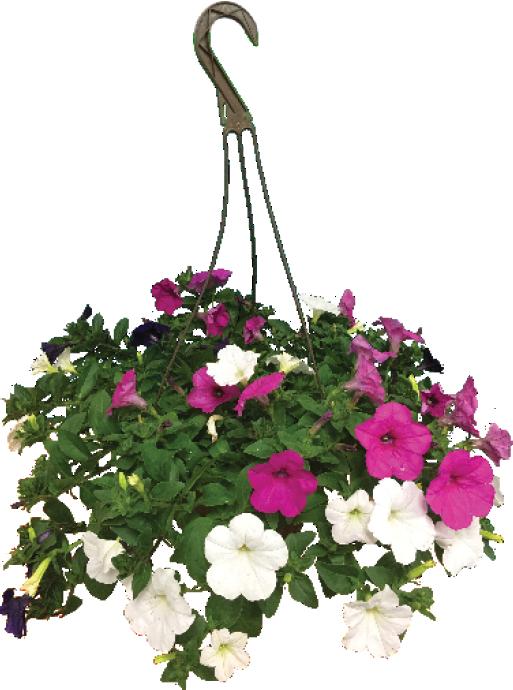 """10"""" Hanging Baskets - $16.99 ea."""
